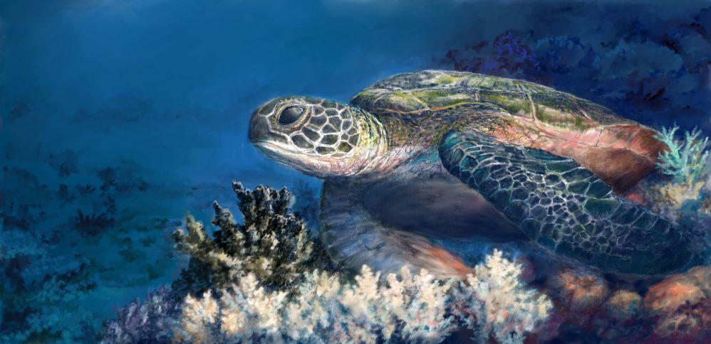 Sea Turtle at Rest by Scott Stafstrom